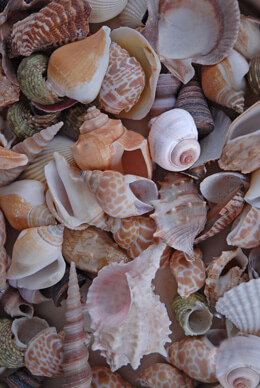 World Mix Shells Medium
