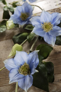 Clematis Garland Blue 48in