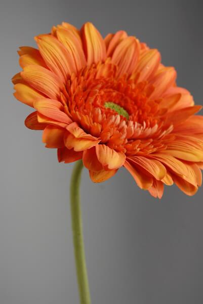 Silk Daisies Orange Gerbera
