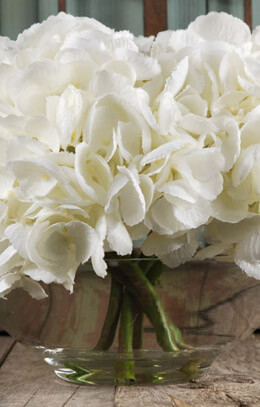 White Hydrangeas in Clear Glass Vase 11x9