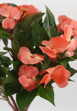 Coral Impatiens Flowers