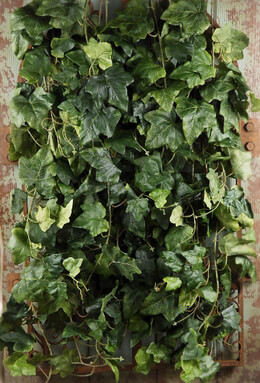 "Silk Ivy Green Wall 32"" x 18"" Mountable"