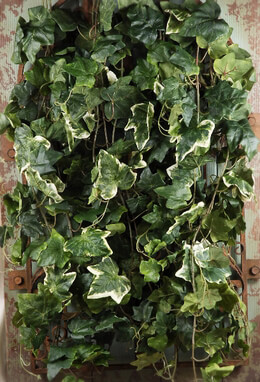 "Silk Ivy Oxford Green & White Wall 32"" x 18"" Mountable"