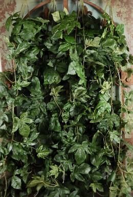 """Ivy Wall Silk 32"""" x 18"""""""