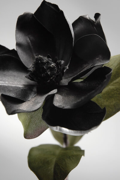 Silk Magnolia Flowers Black