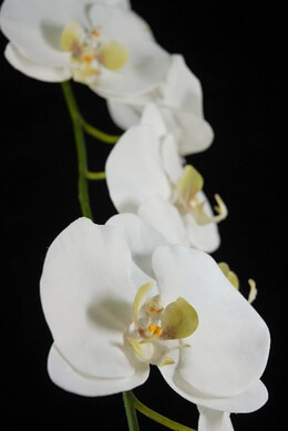 "Silk Orchids 53"" Stem White Natural Touch Flowers"