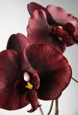 Silk Orchids Red