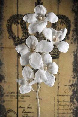Silk Orchids Vintage White 22in