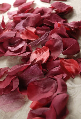 100 Burgundy Red Silk Rose Petals