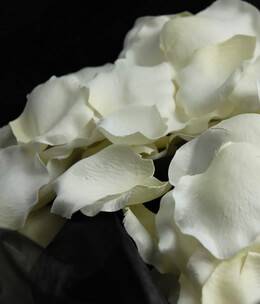 Silk Rose Petals White (100 petals/pkg)