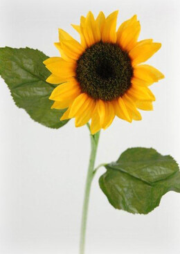 Silk Sunflower 24in