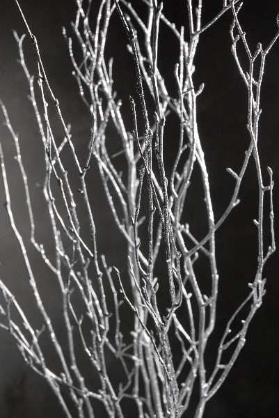 Silver Birch Branches 3-4 ft (4 branches)