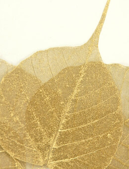 "Skeleton Leaves 4"" Gold Metallic Boda Tree Leaves"