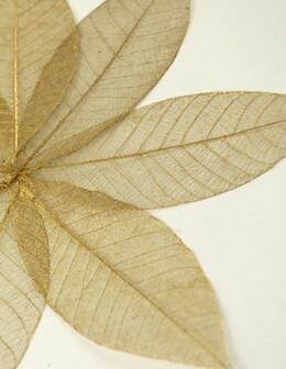 """Skeleton Leaves 5"""" Gold Metallic Leaves (10 leaves/pkg)"""