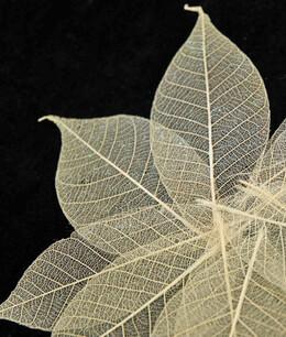 """Skeleton Leaves Natural 3"""" Leaves with Glitter (10 leaves/pkg)"""