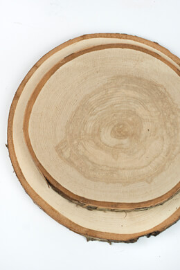 XL Birch Round Tree Slices 9-14in