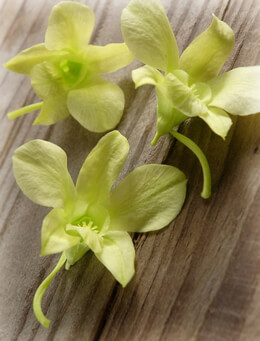 Soft Green Orchids Preserved Natural (8 flowers)