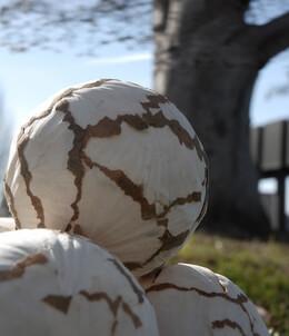 Sola Balls Petal (pkg/6)