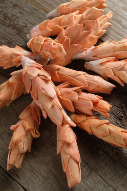 Sola Ginger Flowers Peach 4in (16 pieces)