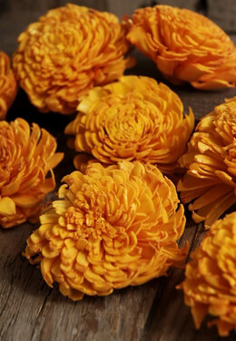 12 Sola Flowers Orange Carnation Flowers