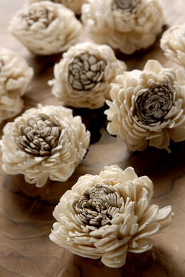 Sola Flowers Two Toned | Pack of 12
