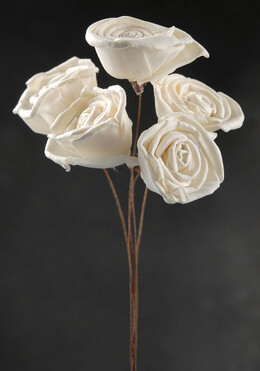 Sola Roses Stemmed | Bunch of 5
