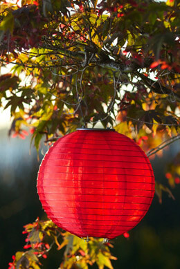"Red Soji Original 10"" Solar Lantern"
