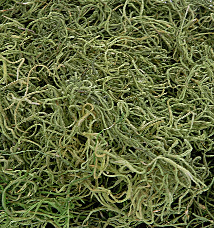 moss spanish basil 125 cu in