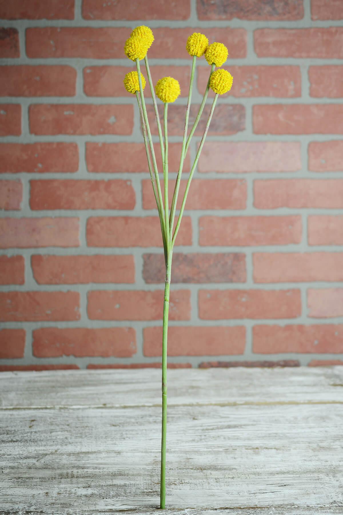 "24"" Silk Billy Button Craspedia Flower Spray"