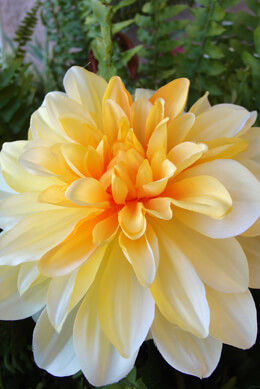 Yellow Silk Dahlia Flower Spray