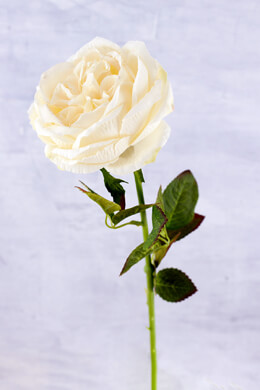 Silk English Rose White Spray 28""