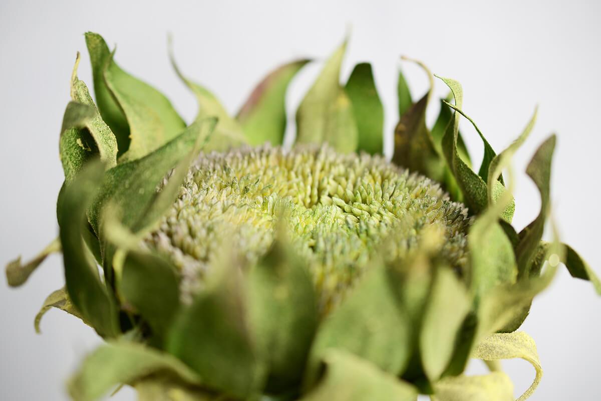 Giant Green Sunflower Stem 32in