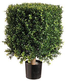 Square Boxwood Topiary in Plastic Pot Two Tone Green 21in