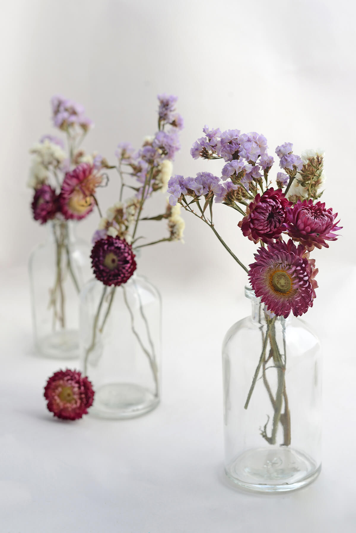 Purple Dried Strawflowers