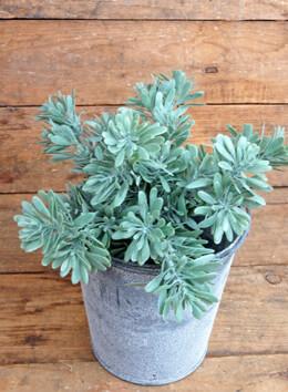 Succulent Bush Pick 9in