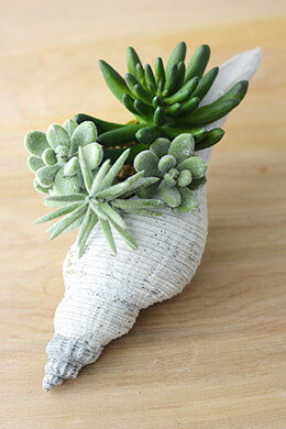 Faux Succulents in Shell 8""