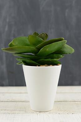 Succulent Pick 7in