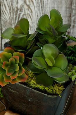 Succulent Pick Kalanchoe 8in