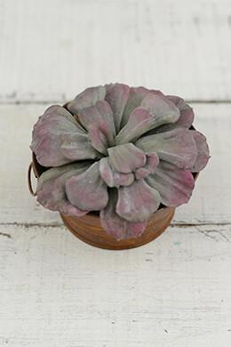 Mauve Aeonium Artificial Succulent Plant 7x3