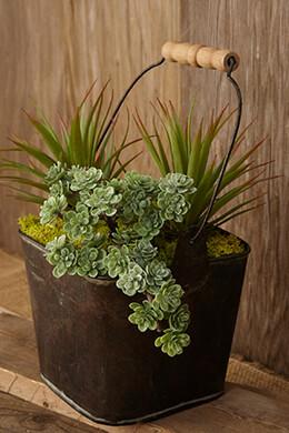 Succulent Pick Sedum 5in