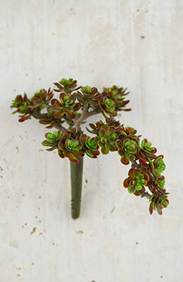 Succulent Pick Sedum Burgundy 5in