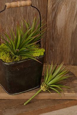 Succulent Pick Yucca 7.5in