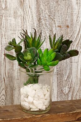 Succulent Picks 5-7in (Set of 6)