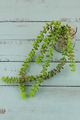 Succulent Sedum Vine 19in