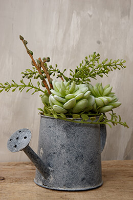Succulent Watering Can Green 7in