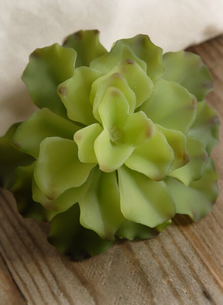 Natural Touch Succulent 4.5in