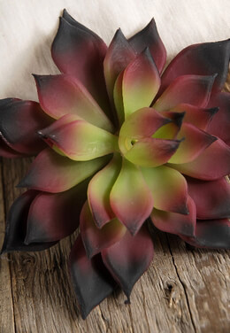 Artificial Succulent Burgundy Tipped 4.5in