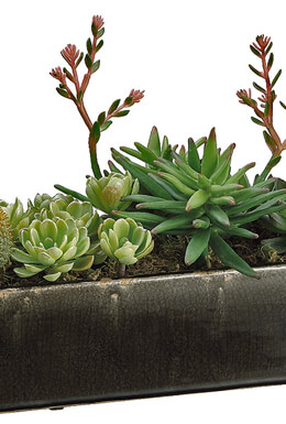 "24"" Succulent Display SHIPS FOR FREE"