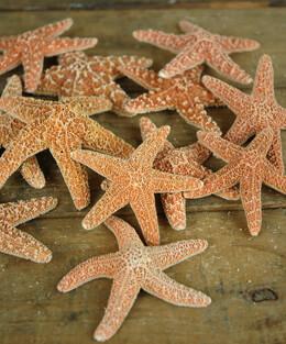 Sugar Starfish 3-4in (Pack of 12)