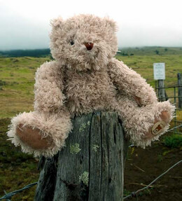 "Super Soft Leo Bear 10"" Moulin Roty Baby Toys"